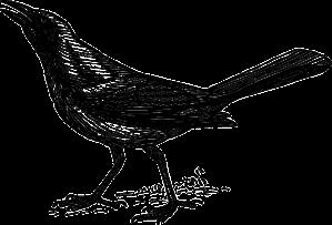 grackle-152983_640