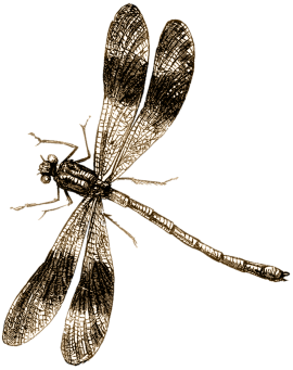 dragonfly-954411_1280-from-pixabay